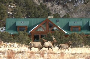 Family friendly lodging in the Buena Vista valley with wildlife